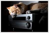 Cat and amplifier :)